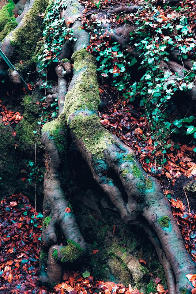 Badock's Wood: An oasis of greenery in North Bristol