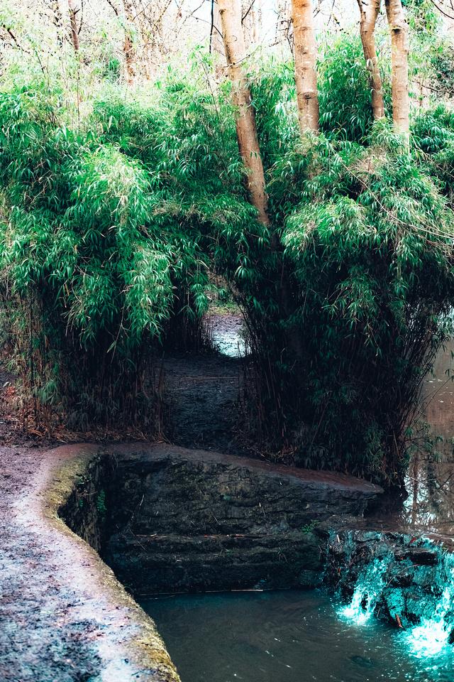 Badock's Wood in Bristol