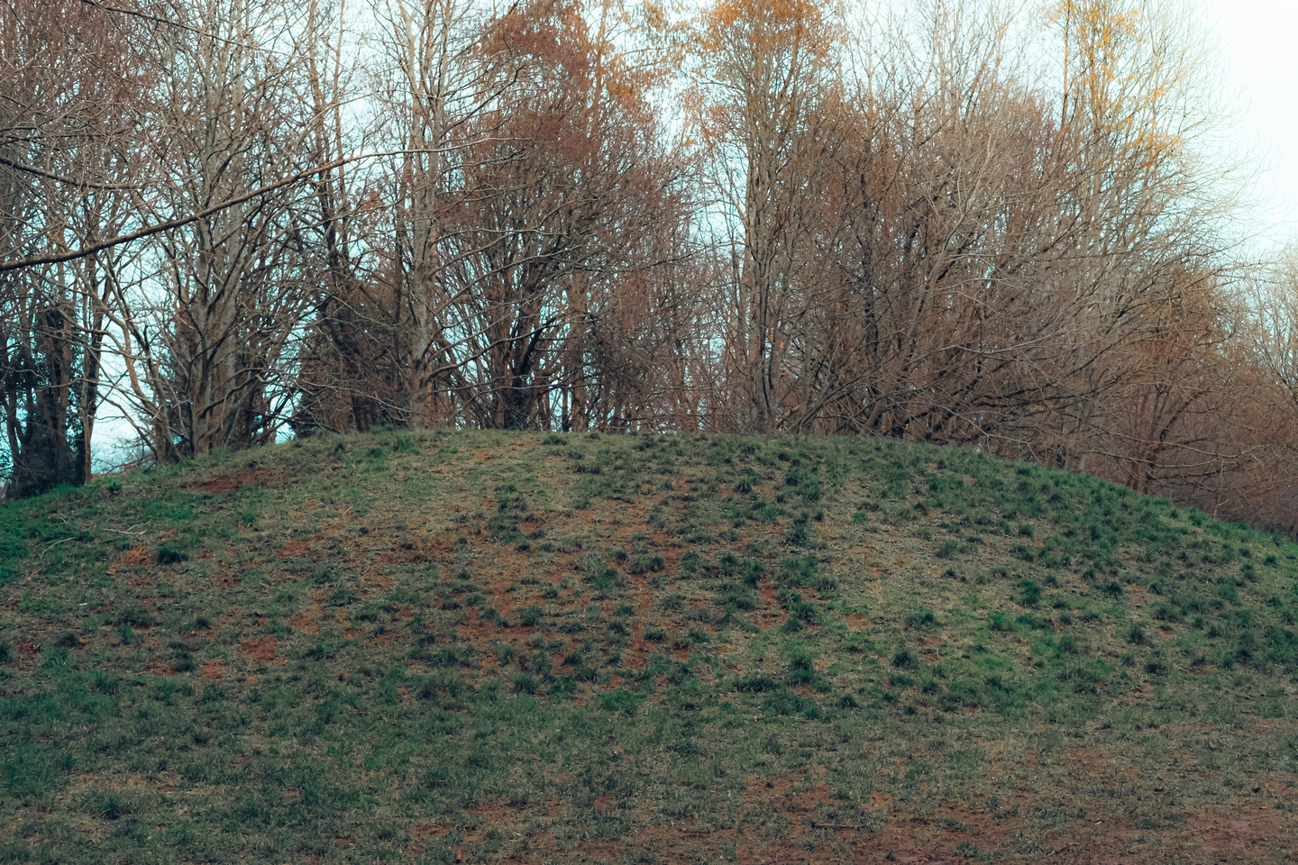 Badock's Wood and its Bronze Age burial mound