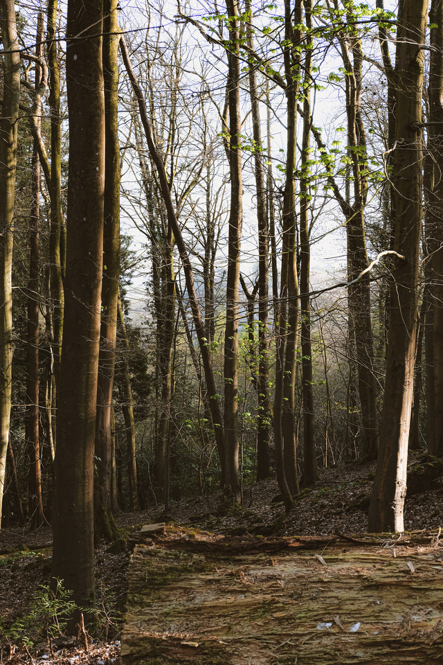 Pictures of Bristol | the woodland at Ashton Court